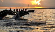 lovina-dolphin-tour-bali-travel-experiences