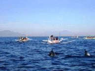lovina-dolphin-watching-bali-travel-experiences