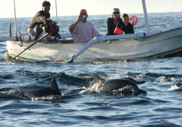lovina-wildlife-dolphin-watching-bali-travel-experiences