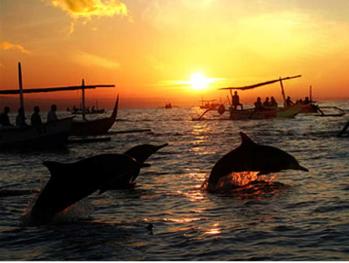 lovina-wildlife-dolphin-watching-tour-bali-travel-experiences