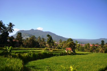 rice-field-view-at-sekumpul-village-bali-travel-experiences