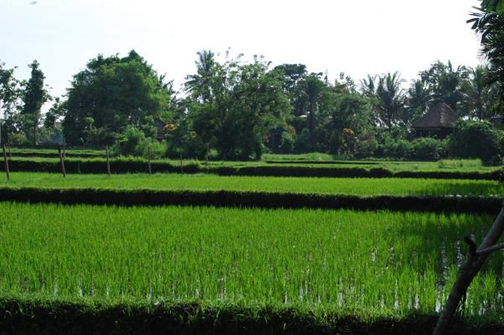 rice-field-view-of-saren-indah-ubud-bali-travel-experiences
