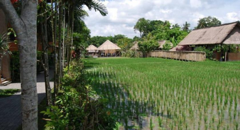 rice-field-view-saren-indah-ubud