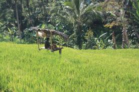 sekumpul-rice-field-trek-bali-travel-experiences