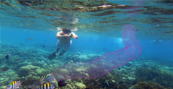 snorkeling-and-diving-at-menjangan-island-bali-travel-experiences