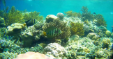 snorkeling-at-menjangan-island-bali-travel-experiences
