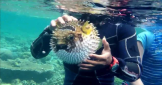 snorkeling-tour-at-menjangan-island-bali-travel-experiences